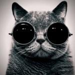 おしゃれ猫。にゃんこ流ファッションショー画像25連発!まとめ
