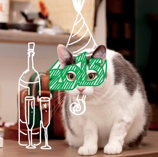 2015猫祝い