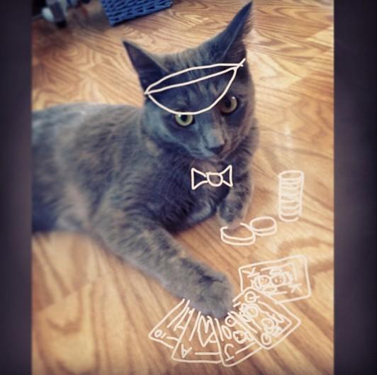猫ギャンブラートランプ