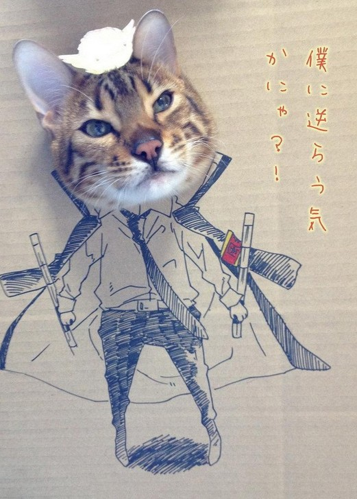 猫顔はめダンボール