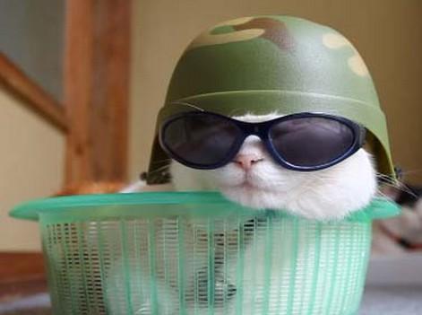 猫サングラス軍帽子