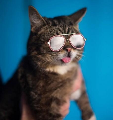 猫サングラスハリウッド