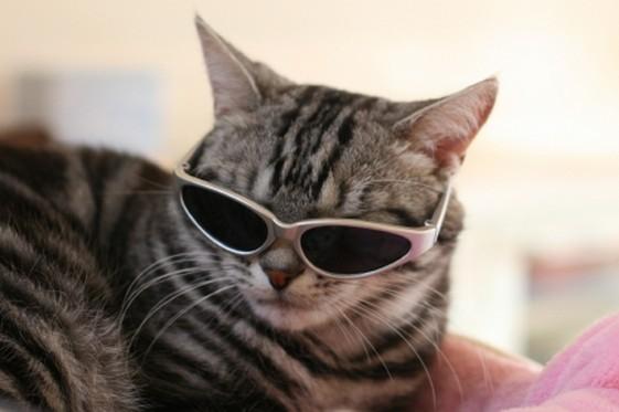 猫サングラスイケメンちょい悪