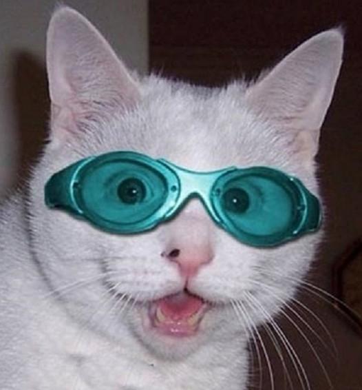 猫サングラス博士