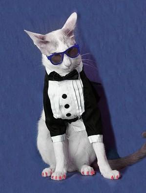 猫サングラス蝶ネクタイ