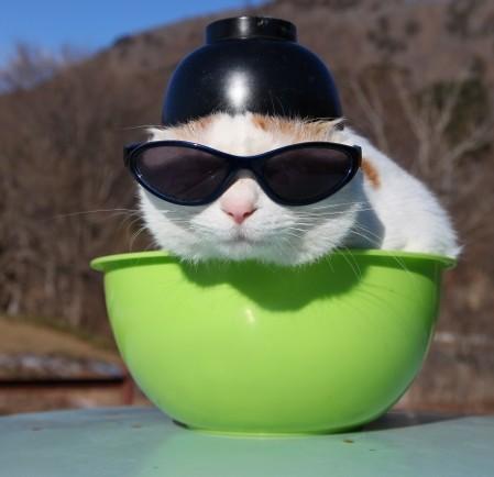 茶碗サングラス猫