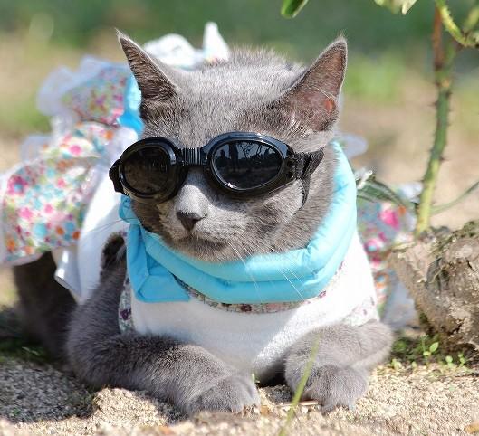 猫ゴーグル