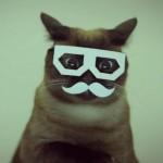 メガネ猫画像まとめ2015。おしゃれインテリ爆発15選