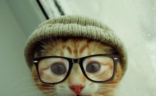 ニット猫メガネ