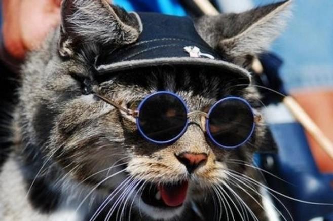 メガネ猫ハリウッド
