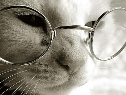 インテリ猫メガネ