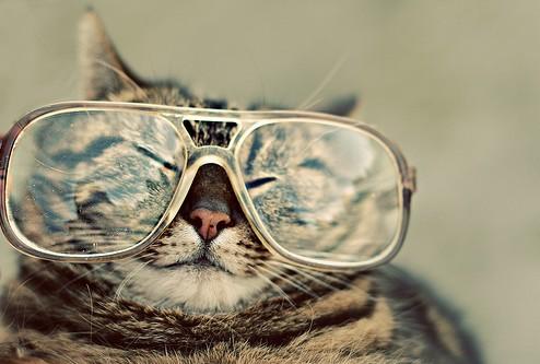 バイク乗り猫メガネ