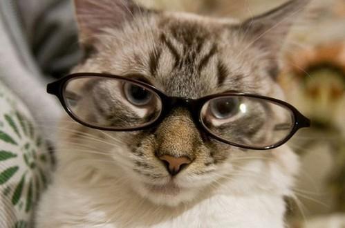 黒縁メガネ猫