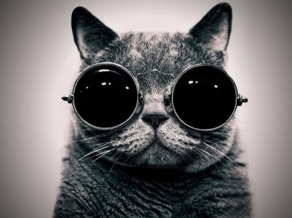 おしゃれ猫1