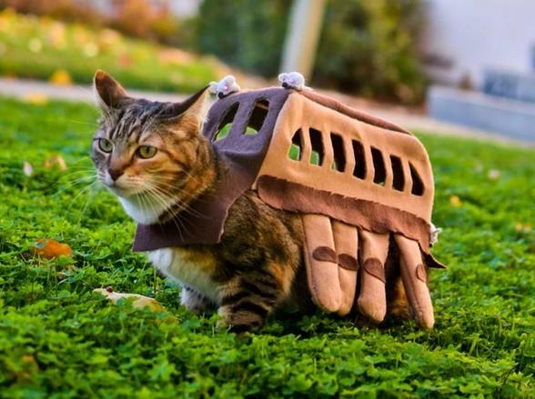 おしゃれ猫ファッション