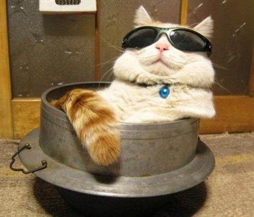 猫おしゃれサングラス