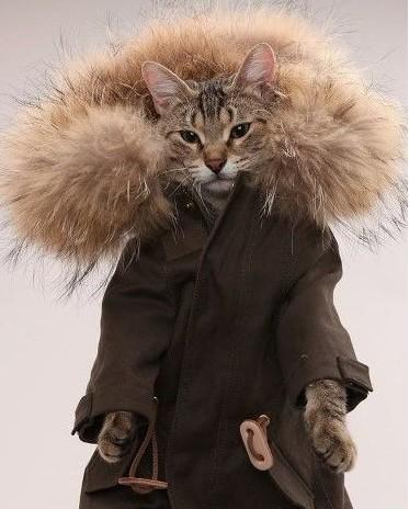 猫とコート