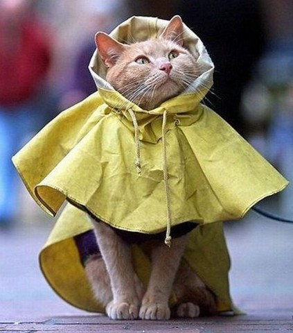 猫ポンチョレインコート
