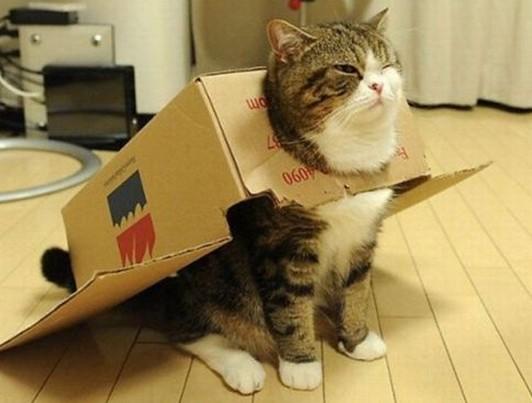 猫ダンボールマント