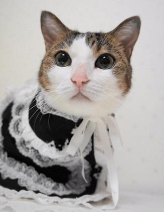 猫ゴスロリファッション