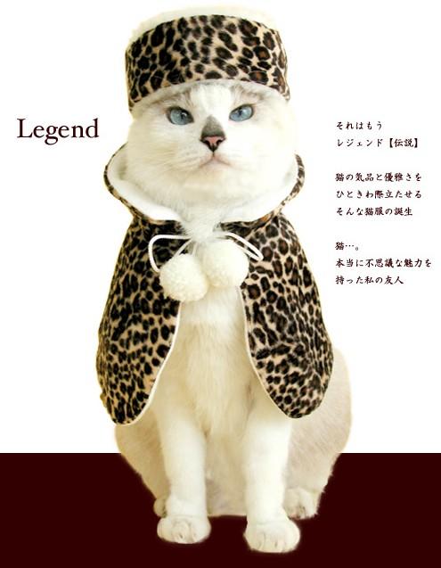 猫王様ブルジョワ