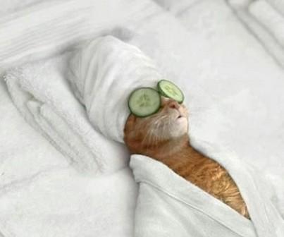 猫美容エステ