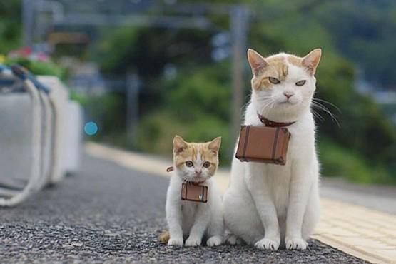 猫旅行にゃらん