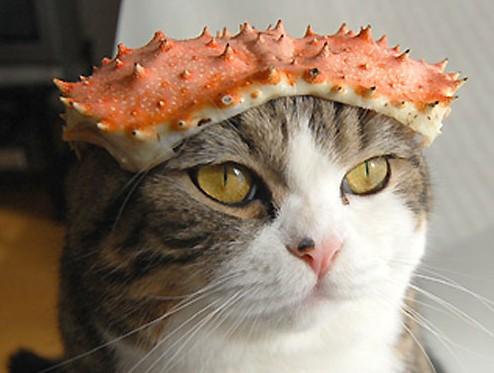 猫蟹のカラ