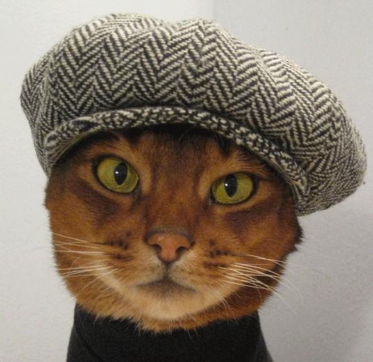 帽子と猫と美人さん