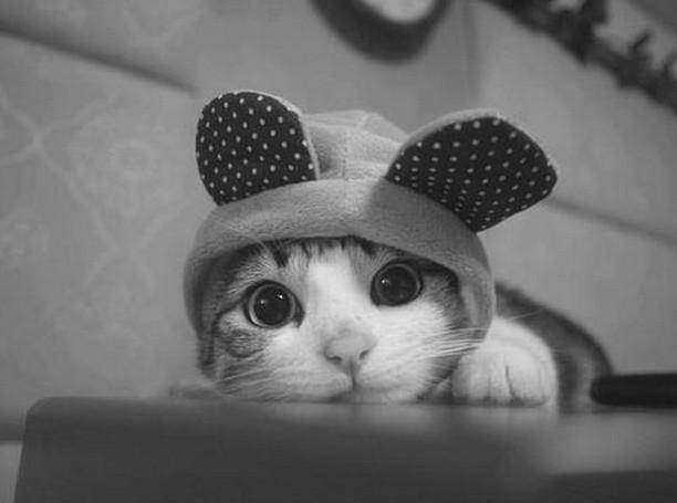 妖精猫かわいいおしゃれ