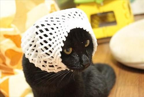 網タイツ猫