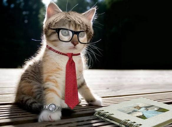 ビジネスネクタイメガネ猫