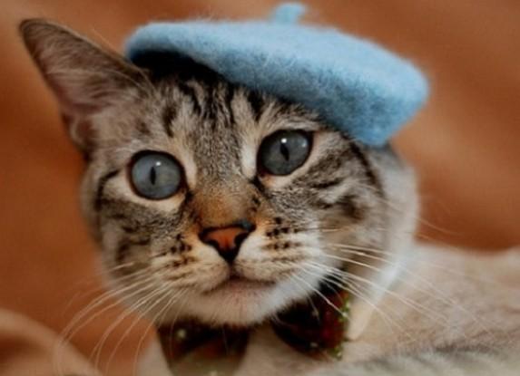 猫画家帽子
