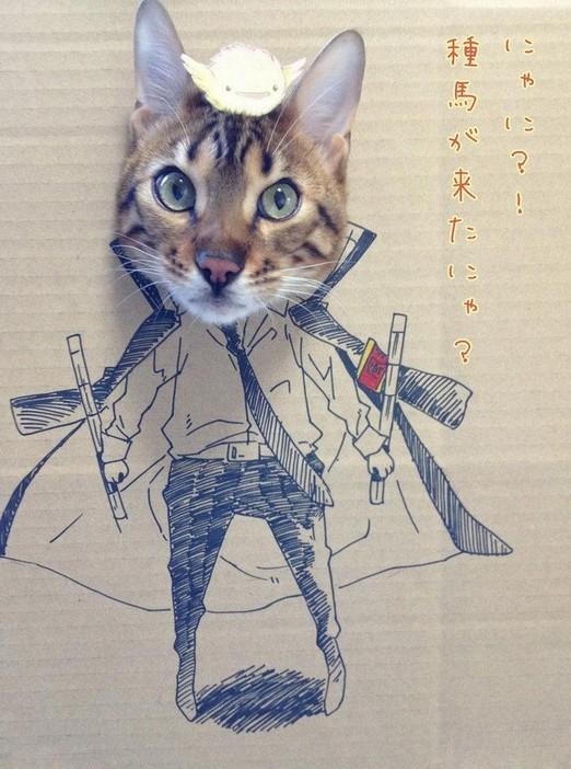 猫顔ダンボール絵