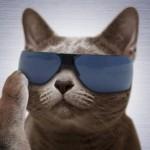 サングラス猫画像まとめ。ワイルド、ハードボイルドねこ18選