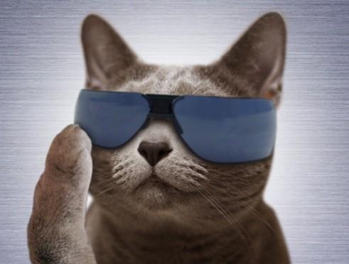 サングラス猫イケメン