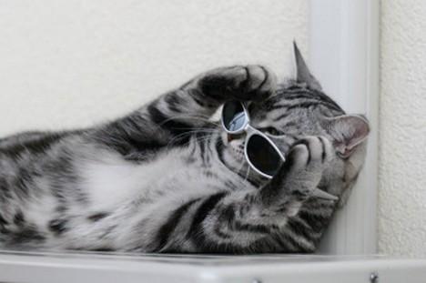 サングラス猫メガネ