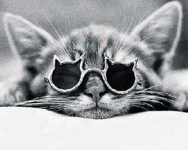 猫型サングラス猫縁