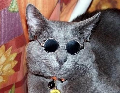 猫サングラスおしゃれ