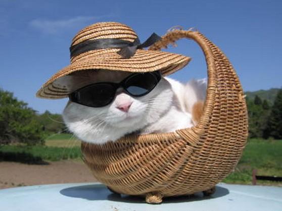 猫サングラス麦わら帽子籠寝