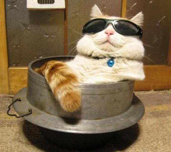 猫鍋風呂サングラス