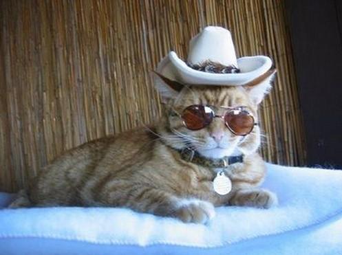 猫西部劇サングラスハット