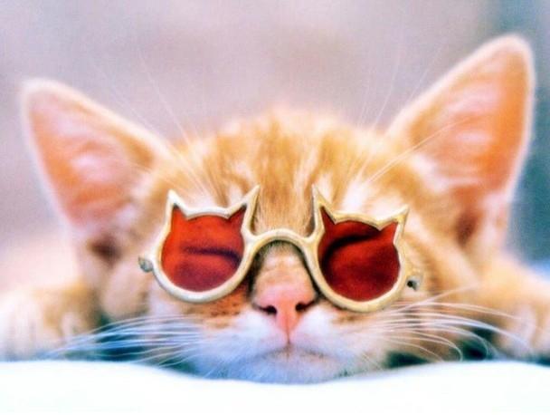 猫縁メガネ猫