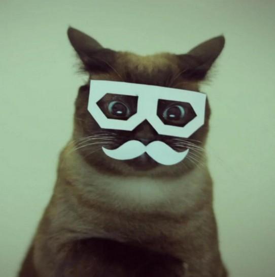 猫紙メガネひげ馬鹿
