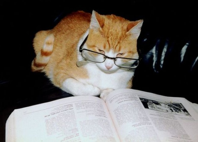 メガネ猫本を読む猫読書